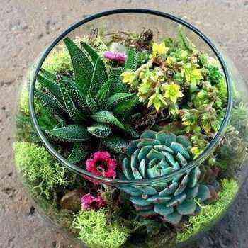 Plants suitable for florarium