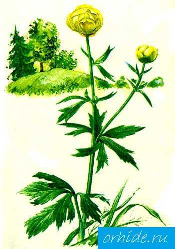 Plants for paludarium