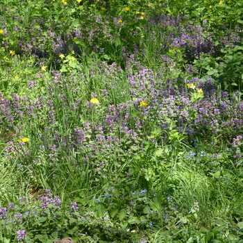 Forest flowers and herbs: photos and names of plants in the forest belt planting and care, cultivation