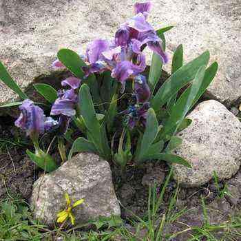 Using herbs in garden design