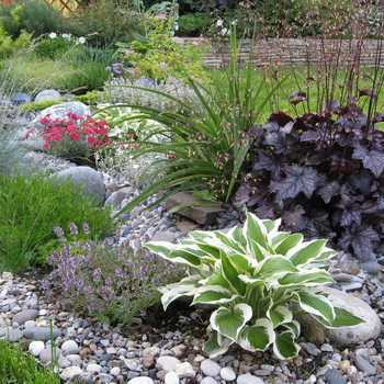 Plants for rockeries: selection and planting