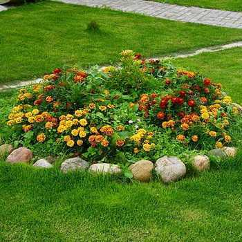 How to set up a flower garden and how to care for it