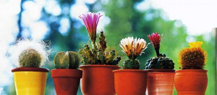 How to care for cacti