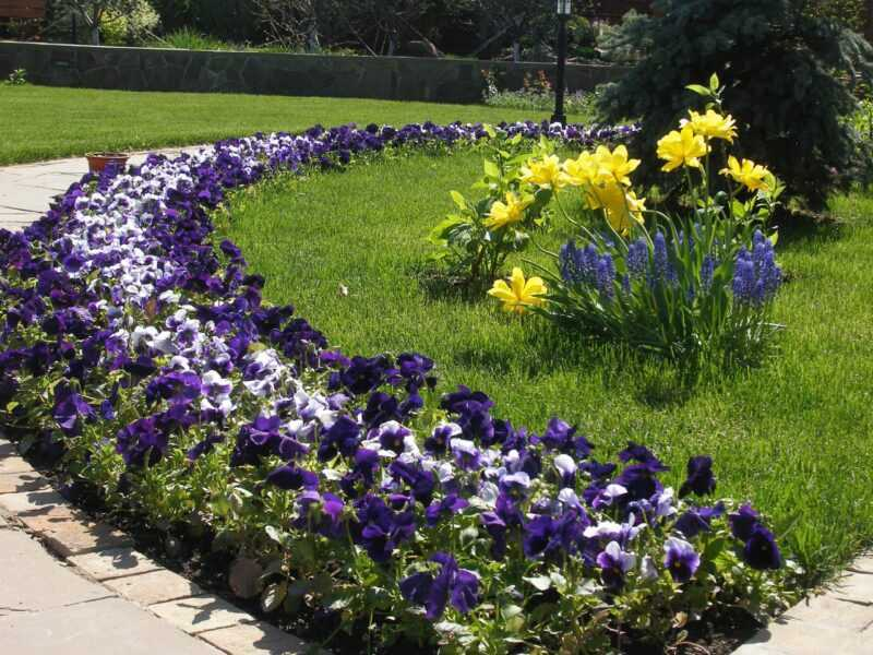 Design of monochromatic flower beds and mono flower beds: how to create a monochrome garden?