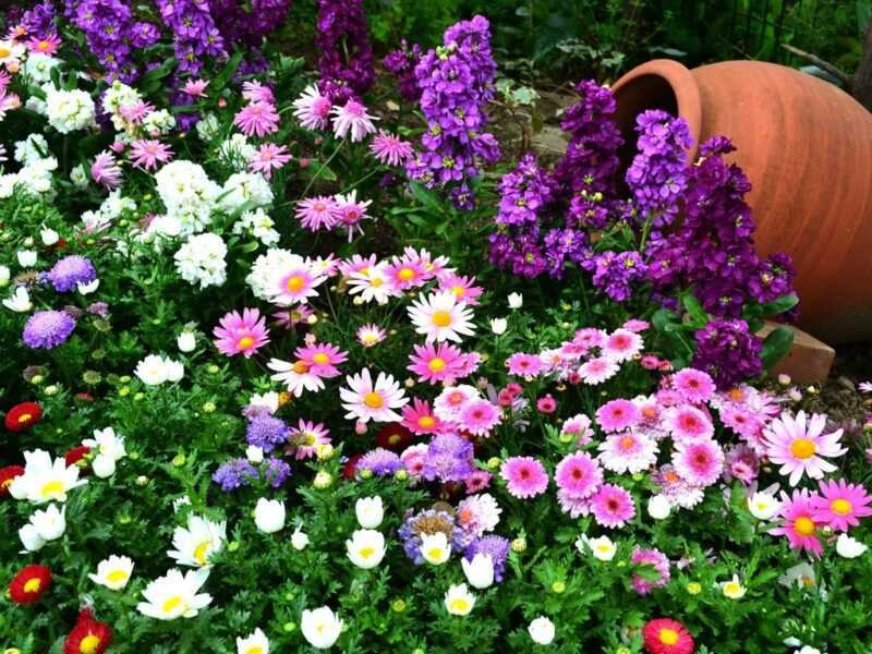 Making a flower bed of annuals: which flowers are better to use + decorators' secrets