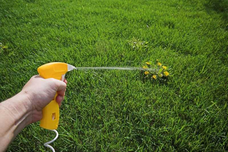Review of diseases and pests of the lawn: how to defend your lawn in an unequal battle?