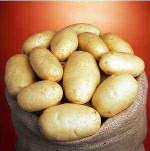 Potato varieties of the Dutch-Irish seed company IPM Potato