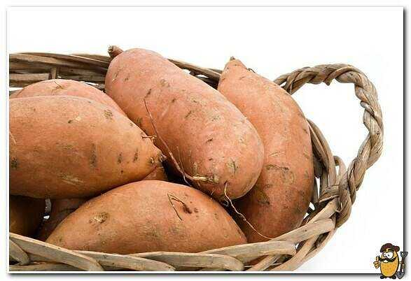 Fodder potatoes care how to grow