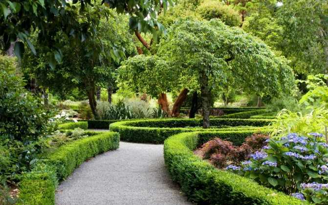 Ornamental plants in human everyday life.