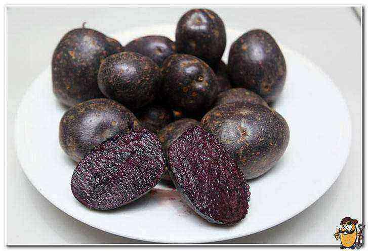 Black potatoes care how to grow