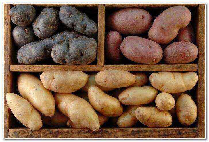 Elite potatoes care how to grow