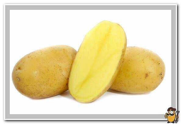 Fidelia potatoes care how to grow