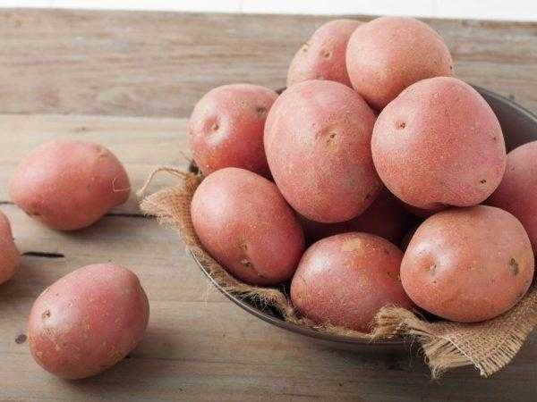 Development of a method for improving potatoes of local selection of varieties Yubilyar and Antonina