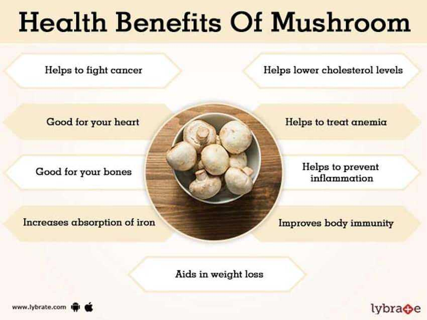 Oyster mushrooms benefit and harm