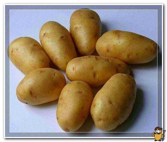 Potato lorch care how to grow