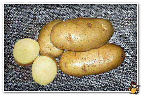 Potato Treasure care how to grow