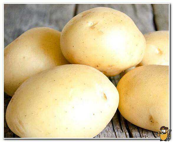 Potato varieties Leader and world leaders in potato cultivation care how to grow