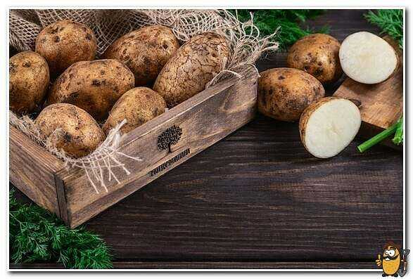 Yanka potatoes: advantages and disadvantages care how to grow