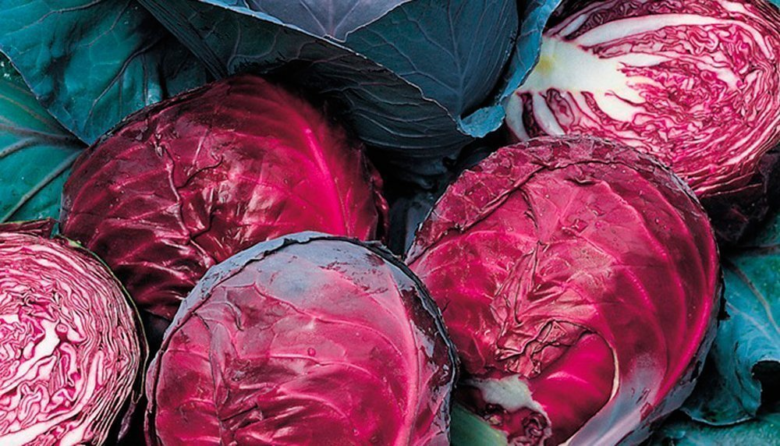 Red cabbage - healthy and bright