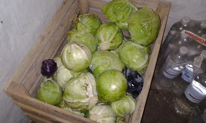 Storing cabbage in a cellar or basement