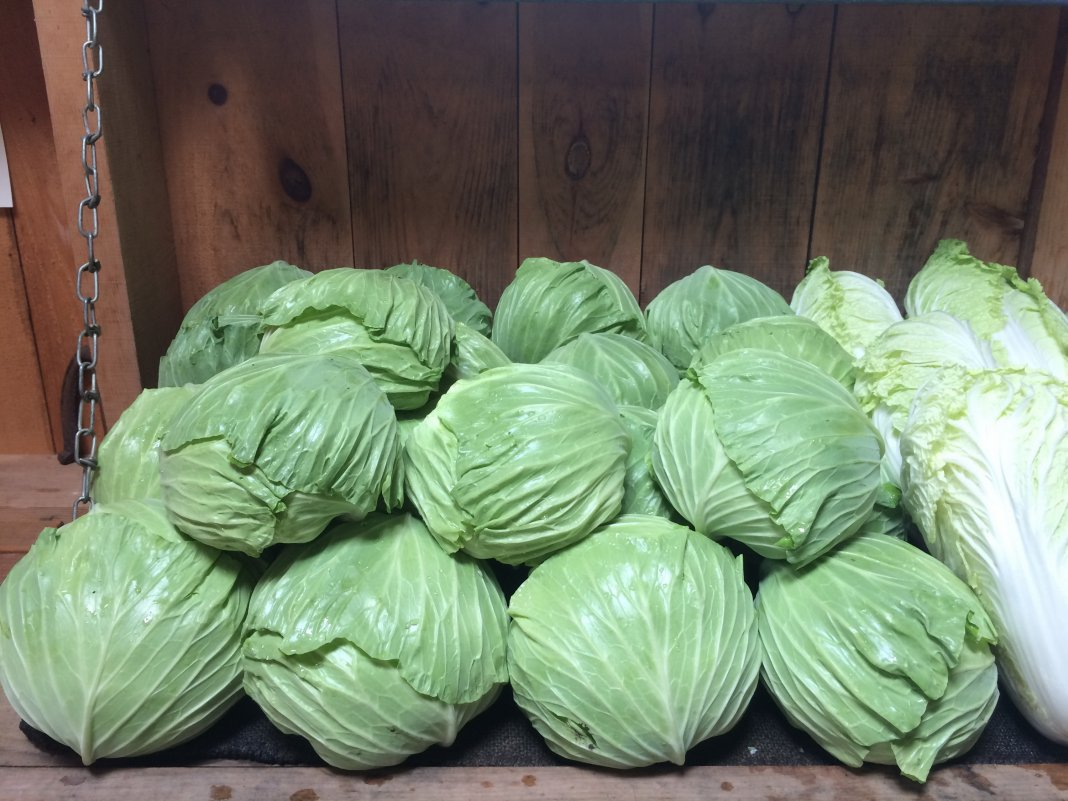 Storing cabbage in bulk pyramid