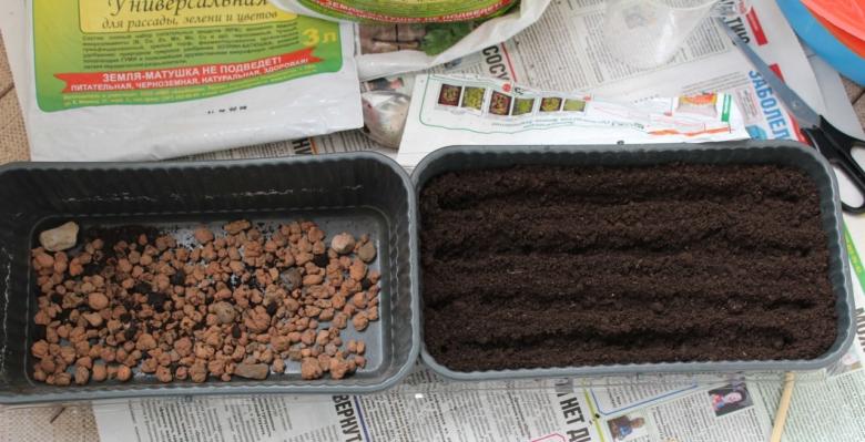 We plant seedlings at home