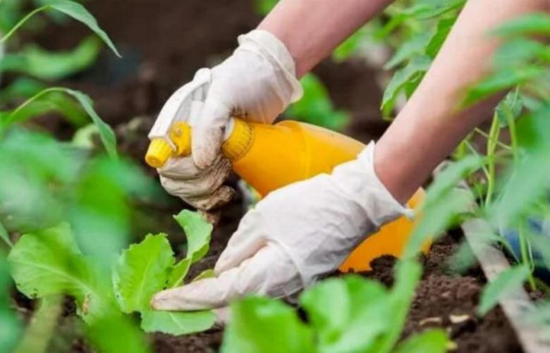 When the number of pests reaches a critical level, chemicals cannot be dispensed with.