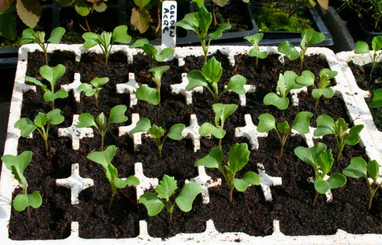 Growing from seedlings