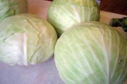 Ripe cabbage heads