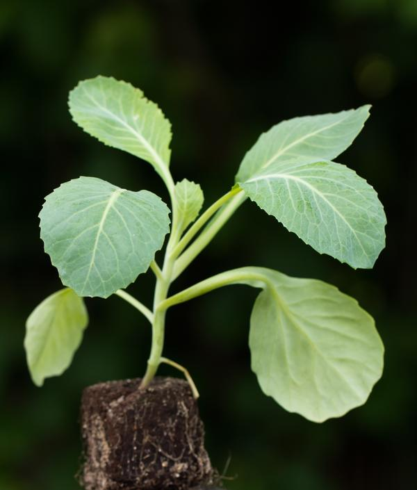 Strong seedlings require hardening