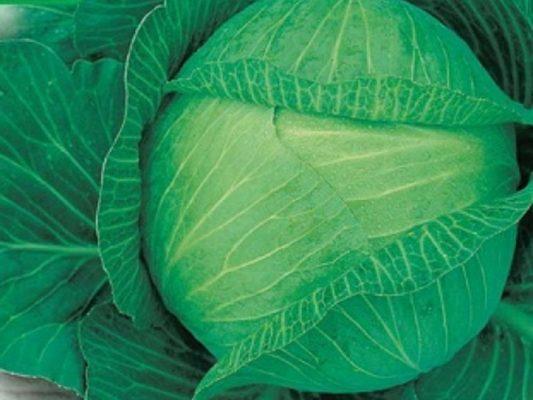 Cabbage Languedoc