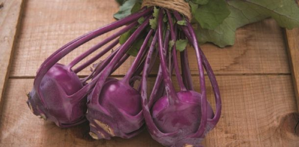 The best varieties of kohlrabi cabbage
