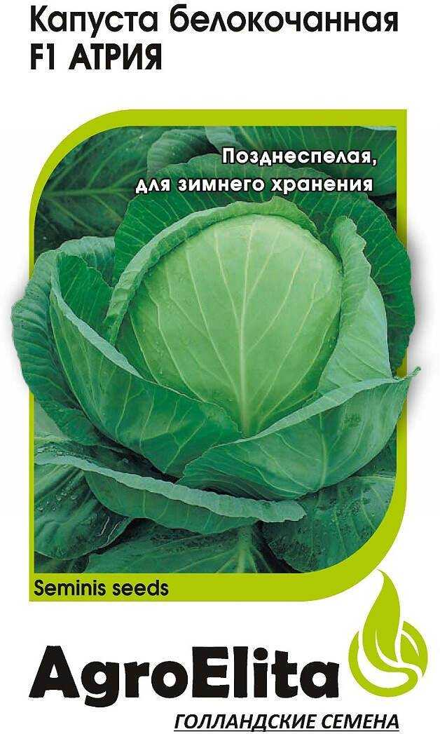 Cabbage Atria: characteristics and description of the variety