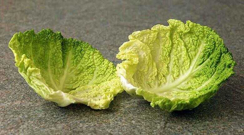Cabbage leaf – a recipe for successfully getting rid of bumps after injections
