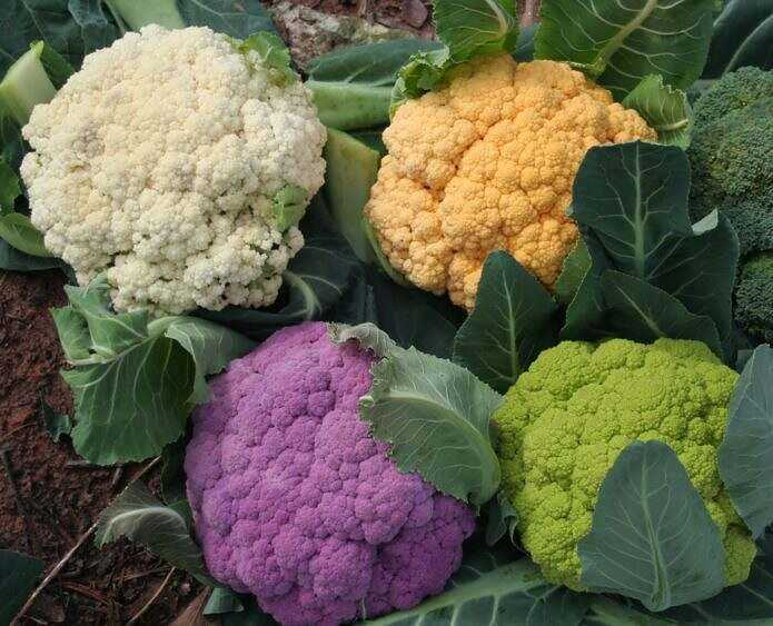 Cauliflower: the best varieties for different regions, reliable seed producers