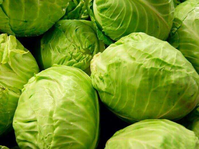 Features of growing early white cabbage in Russia