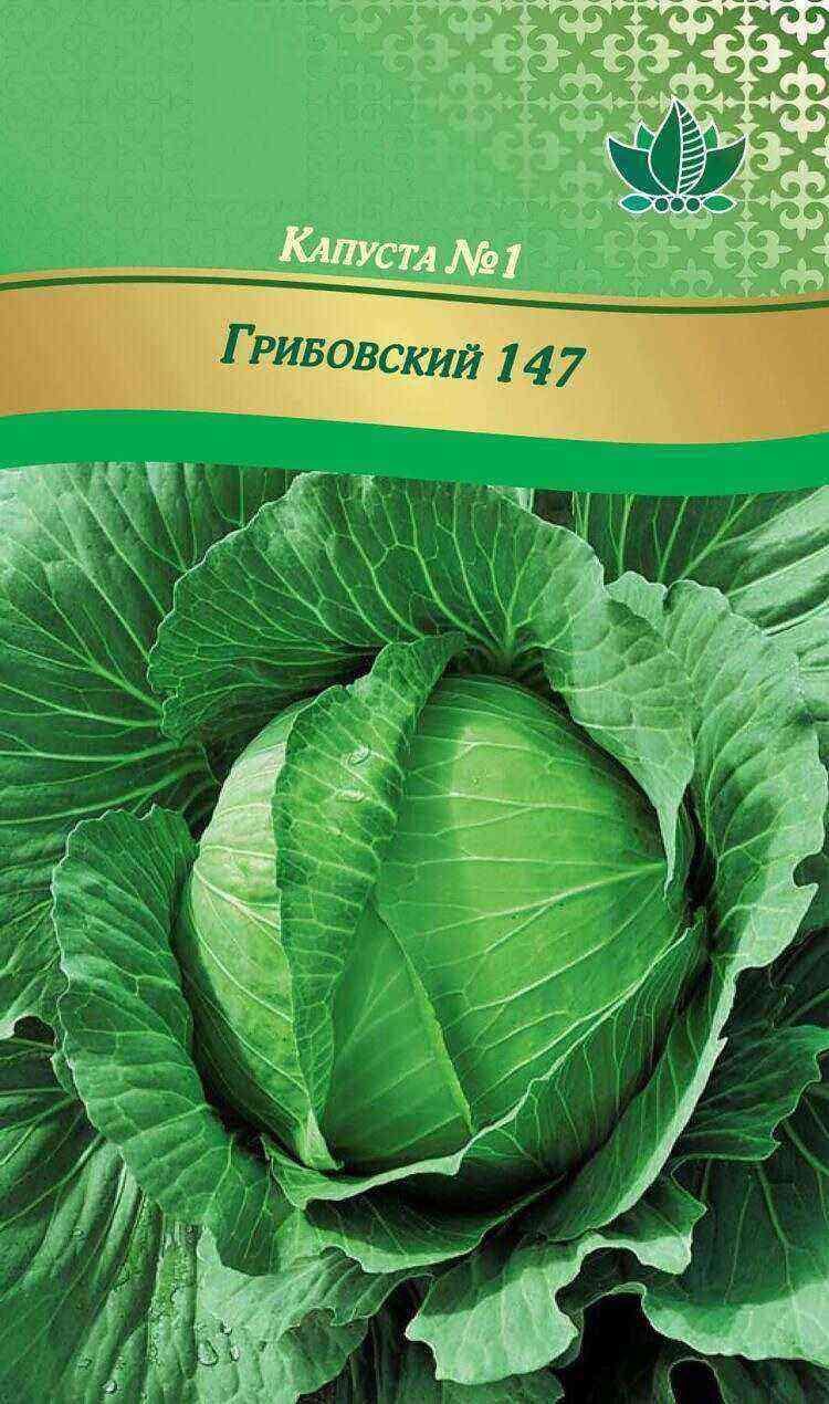 Gribovskaya cabbage: characteristics, description and care
