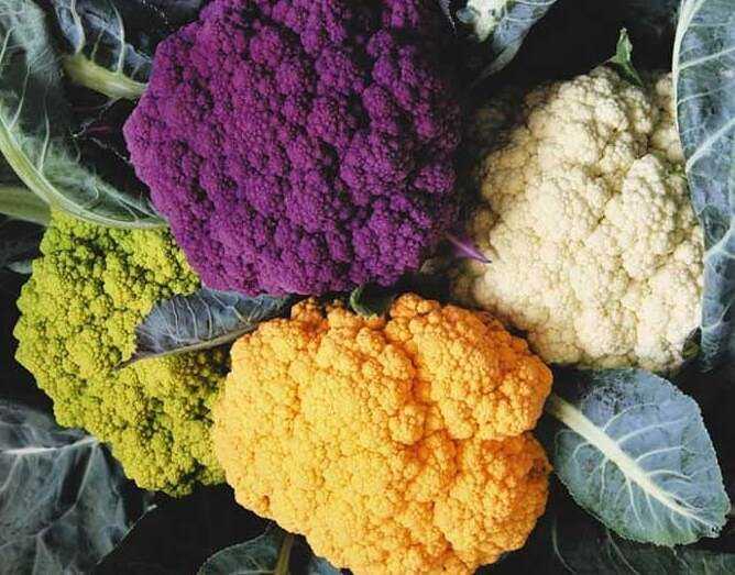 How to properly plant cauliflower