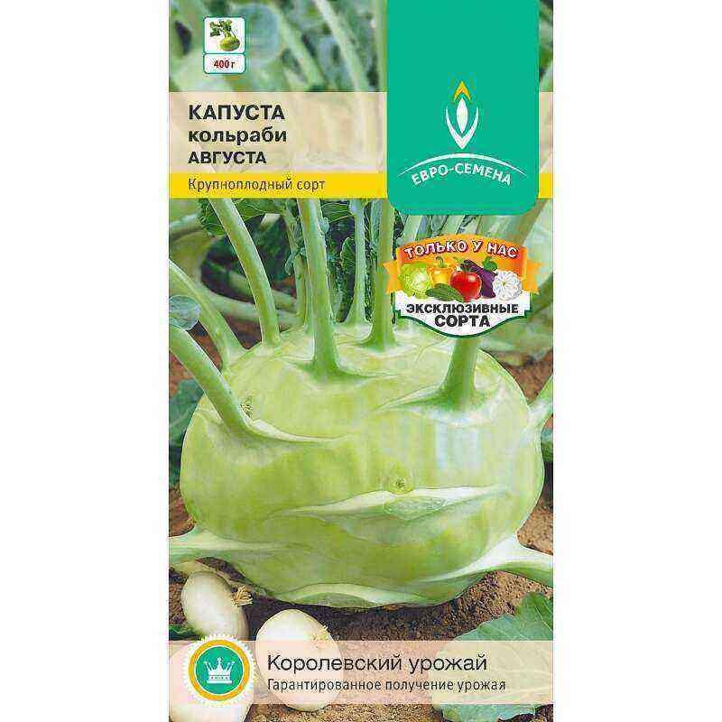 Kohlrabi cabbage: planting and growing