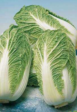 Peking cabbage: features of the culture and methods of cultivation
