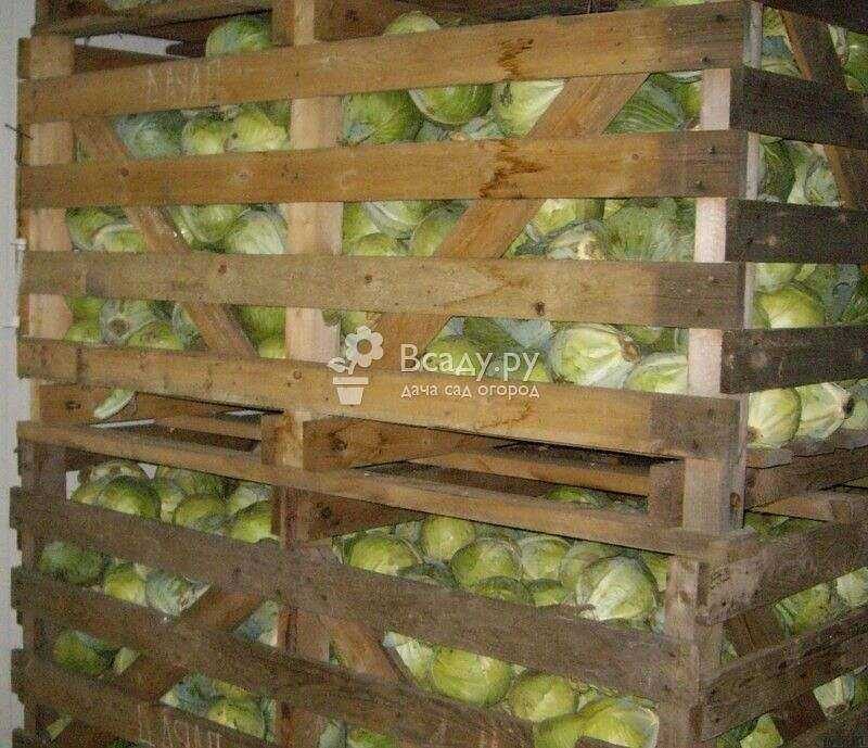 Storage rules for cabbage and beets