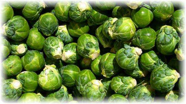 The best Brussels sprouts for your garden