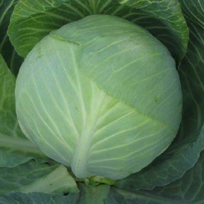 Cabbage Valentina F1