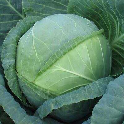 The best varieties of cabbage for long-term storage