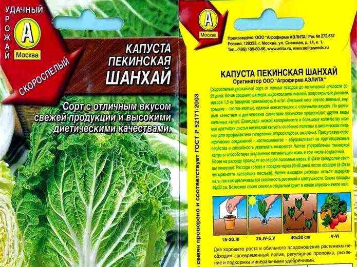 The main terms of sowing and planting cabbage in Russia