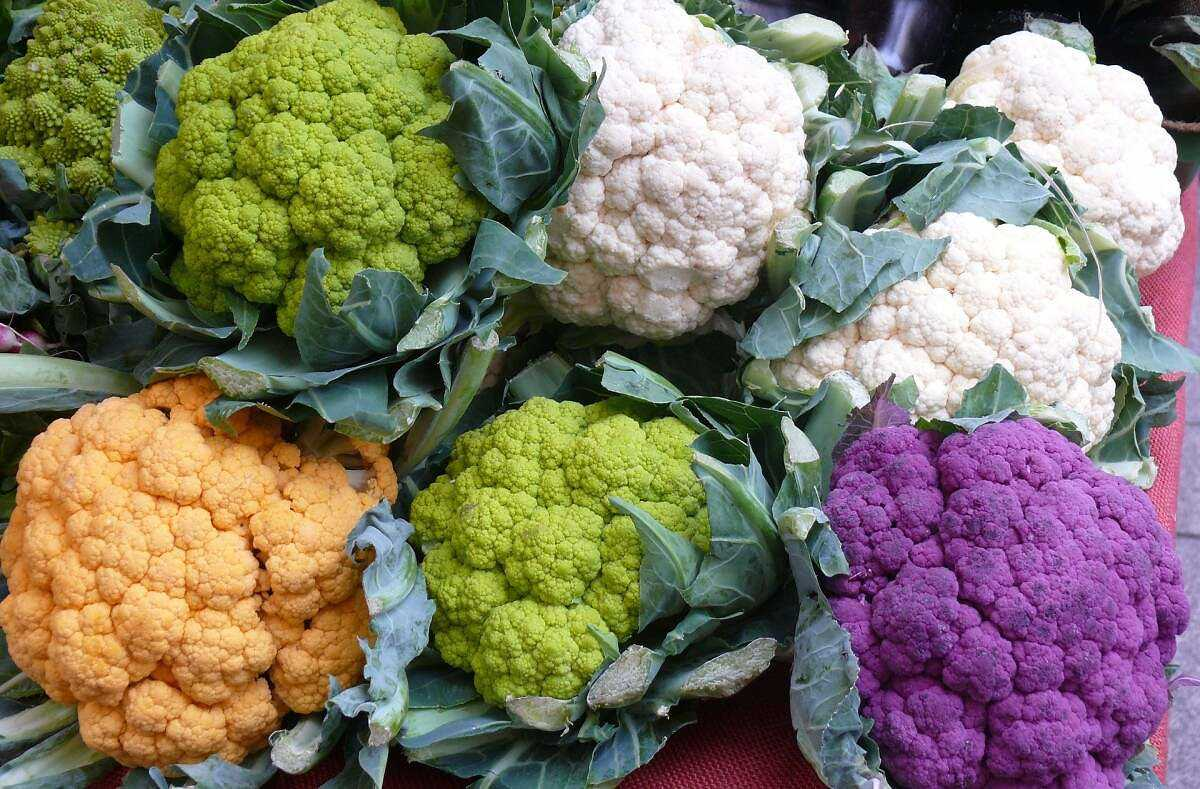 Types of cabbage: varieties and their description