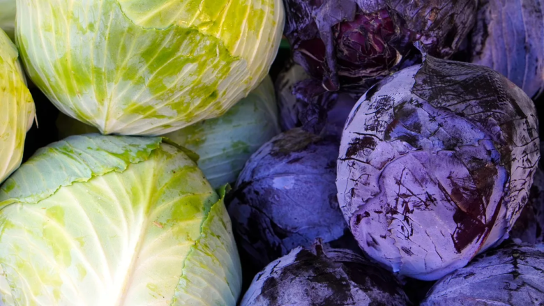 Red and white cabbage garden crops - two varieties of the same species
